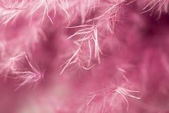 абстрактный пурпур пера предпосылки Всход макроса студии Стоковое Изображение RF