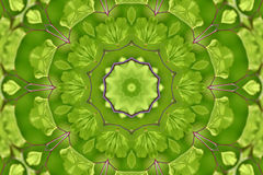 абстрактный сад папоротника Стоковое Фото