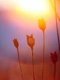 Абстрактный силуэт завода на заходе солнца Стоковые Изображения