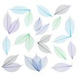 абстрактный скелет листьев предпосылки Стоковое Изображение RF