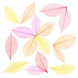 абстрактный скелет листьев предпосылки Стоковая Фотография RF
