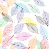 абстрактный скелет листьев предпосылки Стоковые Изображения RF