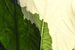 Абстрактный слой цвета на листьях Созданный естественным стоковые изображения