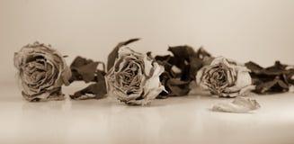 Абстрактный состав - высушенные розы с зелеными листьями Стоковые Изображения RF