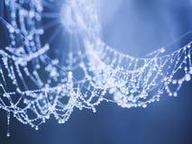 Абстрактный состав от природы, с красивой водой падает на spiderwebs Стоковые Фото