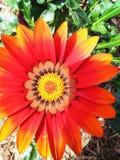 абстрактный спектр лепестков цветка пожара стоковое изображение rf