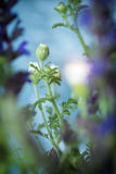Абстрактный цветок лета Стоковая Фотография RF