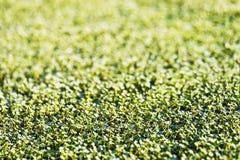 абстрактный цветок ковра Стоковые Изображения RF