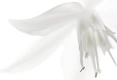 абстрактный цветок крупного плана предпосылки Стоковая Фотография RF