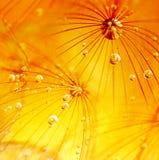абстрактный цветок одуванчика предпосылки Стоковые Фотографии RF