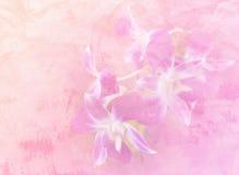 Абстрактный цветок орхидеи Стоковые Изображения RF