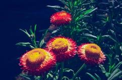 Абстрактный цветок предпосылки в саде Стоковые Изображения