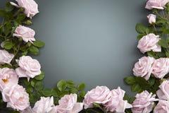 абстрактный цветок предпосылки Стоковые Изображения RF