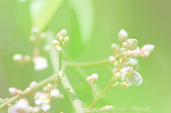 Абстрактный цветок предпосылки из нерезкости фокуса Стоковая Фотография