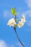 абстрактный цветок предпосылки Стоковые Фото