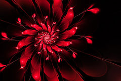 Абстрактный цветок фрактали, красный на черной предпосылке Стоковые Изображения