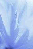 Абстрактный цветок Стоковое фото RF