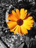 абстрактный цветок Стоковая Фотография