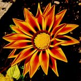 абстрактный цветок Стоковое Изображение RF