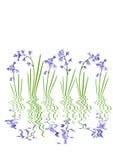 абстрактный цветок bluebell Стоковые Фотографии RF