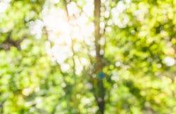 абстрактный backdop предпосылки нерезкости флоры фокуса природы солнечний свет вне стоковая фотография rf