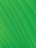 абстрактный striped зеленый цвет предпосылки Стоковые Изображения
