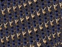 Абстрактным произведенный компьютером дизайн фрактали стоковая фотография