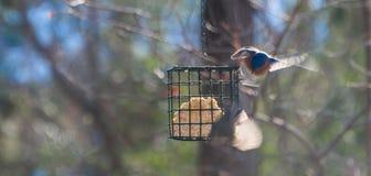 2 абстрактных птицы на фидере Стоковые Изображения RF