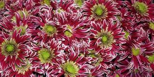 Абстракция цветка Стоковые Изображения RF