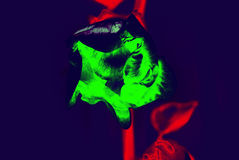 абстракция Цветок настроение Стоковое Фото