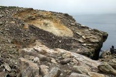 Авантюрист наблюдающ rookery shag и пингвина rockhopper на скале стоковое фото