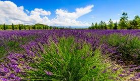 лаванда Провансаль поля Стоковое Изображение