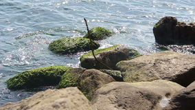 Авария океанских волн над скалистым берегом сток-видео