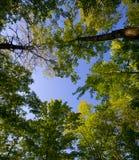 августовская сень стоковое изображение rf