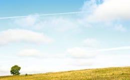 августовский желтый цвет Стоковая Фотография RF