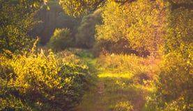 августовское лето природы Стоковые Изображения