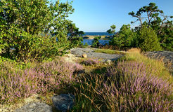 августовское море footpath к Стоковые Фотографии RF