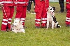 Авиаотряд собаки спасения Стоковая Фотография