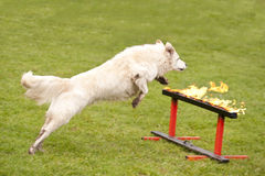 Авиаотряд собаки спасения Стоковое фото RF