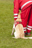 Авиаотряд собаки спасения Стоковые Фото