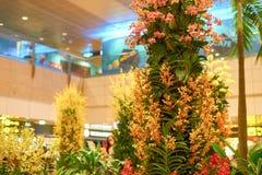 авиапорт changi singapore Стоковая Фотография