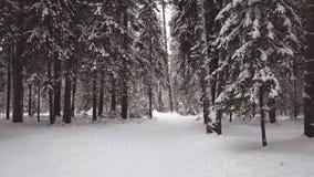 Авиационная съемка в древесине зимы Взгляд сверху видеоматериал