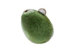 Авокадоы как piggy Стоковое Изображение RF