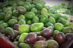 авокадоы свежие Стоковое Фото