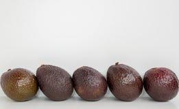 Авокадо Брайна в предпосылке изолированной строкой белой Стоковое Фото