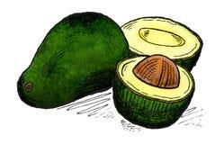 Авокадо Стоковая Фотография RF