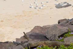австралийская вода дракона Стоковое фото RF