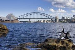 Австралийская змеешейка 2 Стоковая Фотография RF