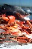 австралийские продукты моря Стоковое Фото
