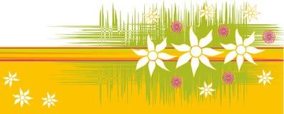 австралийские цветки предпосылки Стоковая Фотография